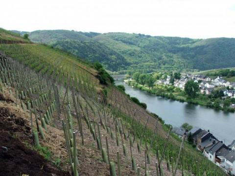 vīna dārzi mozeles upe-baltatour